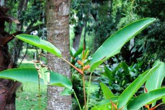 Botanical Garden of Rio: colibri!!