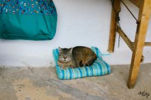 Cats of Milopotamos, Kythira, Greece