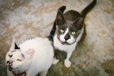 Tavern cats of Kythira, Greece